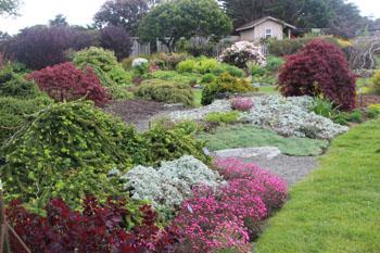 Heather garden and Lawn at Mendocino Coast Botanical Gardens