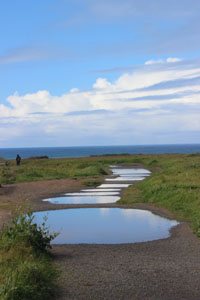 Rain Puddles on Mendocino Headlands