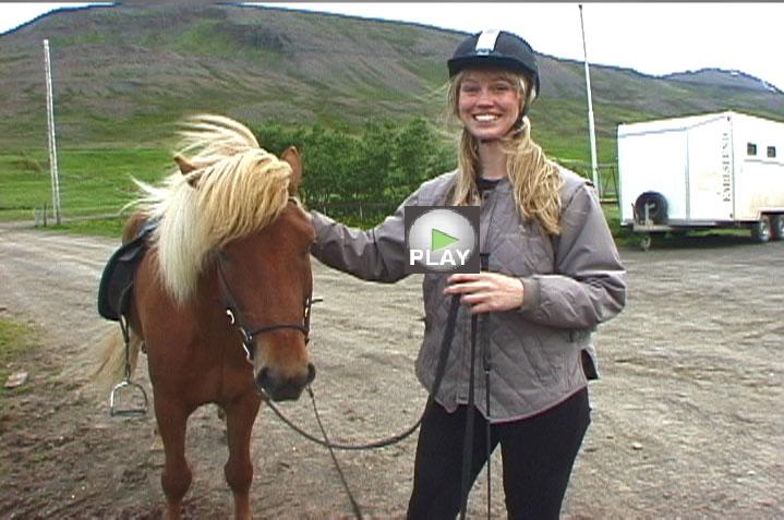 hestakaup horse videos 719x477