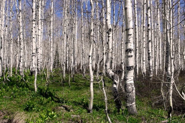 A-Frame/aspen grove, Park City, Utah