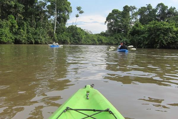 Rain Forest Canoe