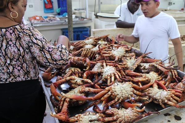 Panama crabs