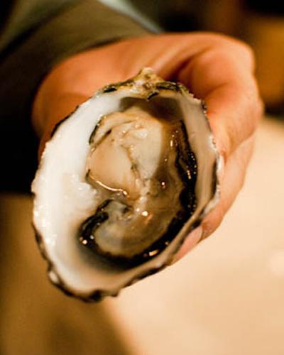 Brazilian Oysters