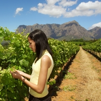 Stellenbosch - Kleine Zalze Lodge : 4 Star ex Johannesburg