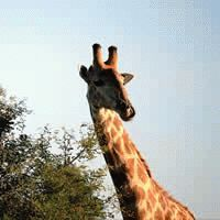 Mpumalanga - Panorama Route & Safari : 3 Star ex Johannesburg : Let's Explore!