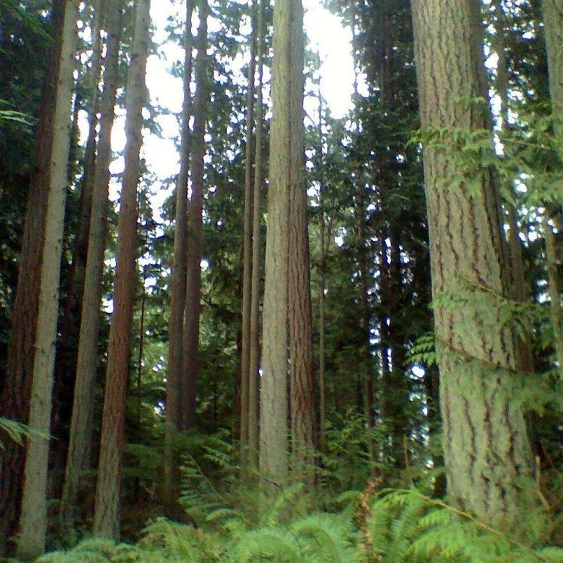 American Forest Lands Washington Logging Company LLC  Maple Valley, WA 98038