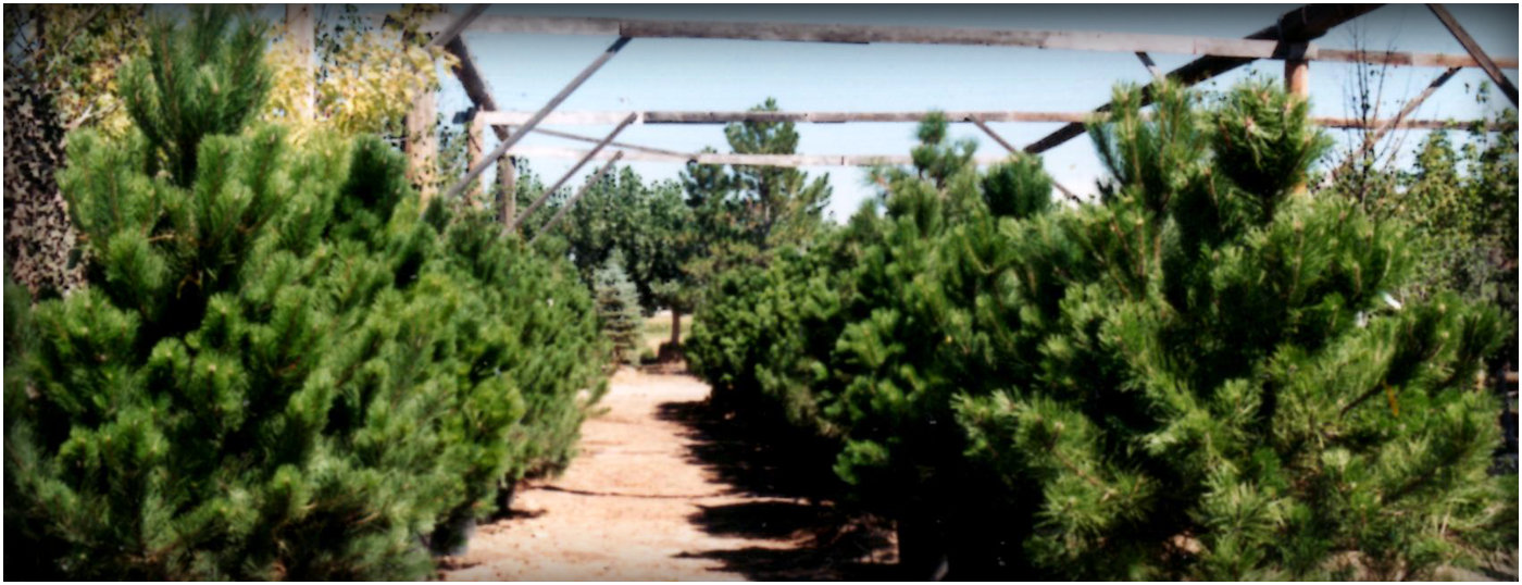 Continental Tree Farms - Colorado Springs, CO