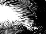 Palmtree2_newsite