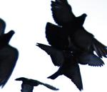 Flightseries_3