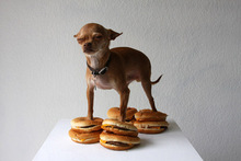 Dog_with_burgers.full