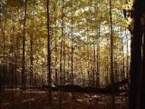 The_woods.full