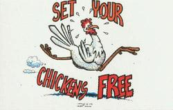 Set_your_chickens_free_postcard.sidebar