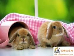 Bunnies!.sidebar