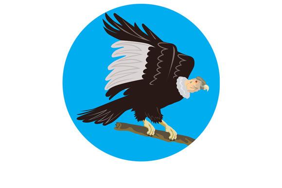 California Condor Perching Branch Ci