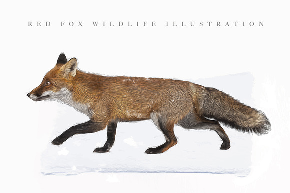 Realistic Red Fox Illustration