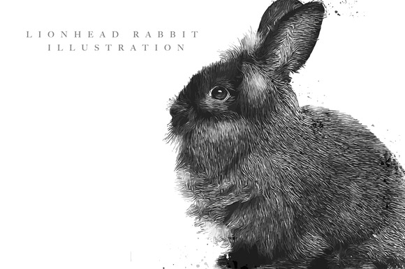 Lionhead Rabbit Illustration