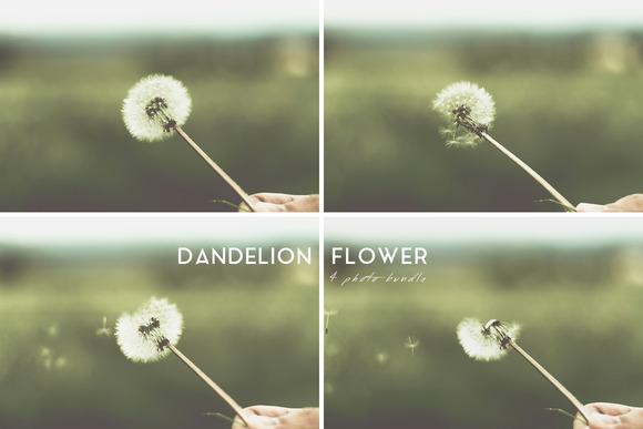 Dandelion Flower 4 Photo Bundle