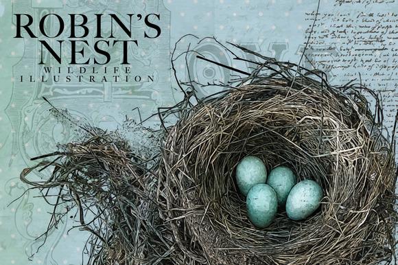 Robin S Nest Vector Illustration