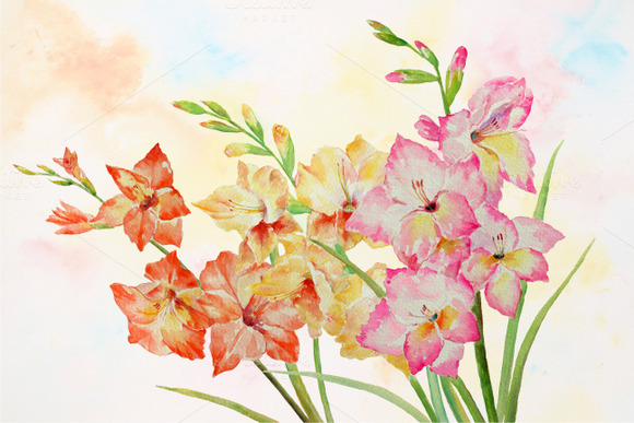 Watercolor Clipart Gladiolus