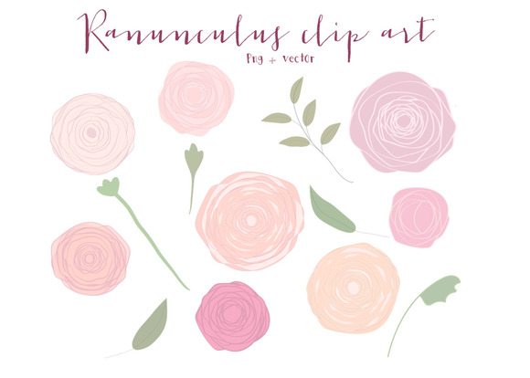 Ranunculus Clip Art Vector And PNG
