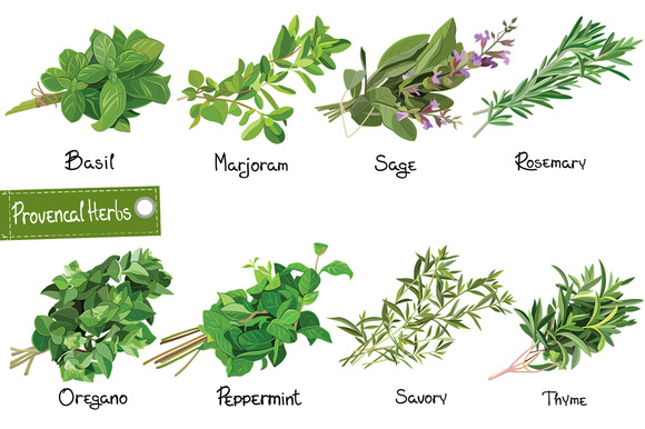 Herbs Cartoon » Designtube - Creative Design Content