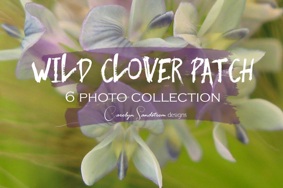 Wild Clover Patch Photo Collection
