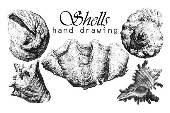 Realistic Seashells