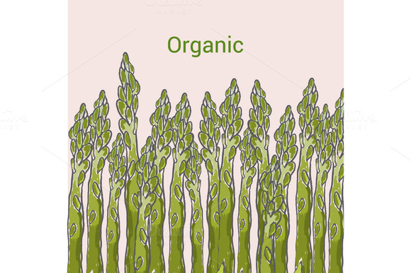 Asparagus Cartoon Vector