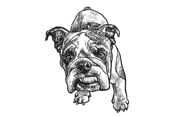 Young Bulldog