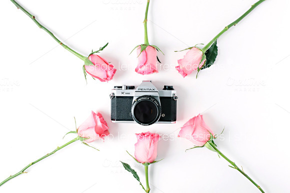 Pink Roses On White Styled Image