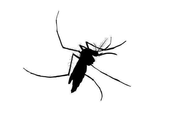 Silhouett Of Mosquito