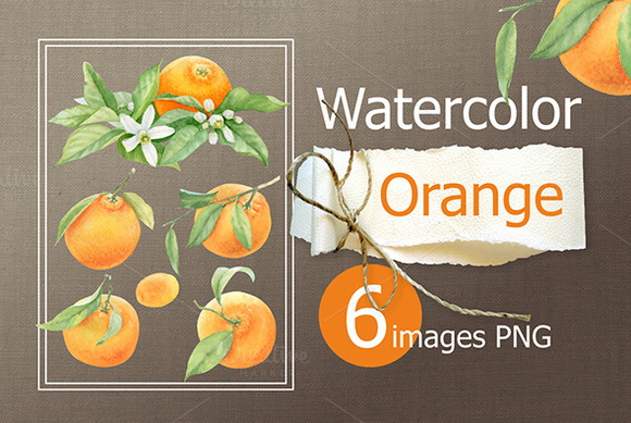 Watercolor Painting Orange