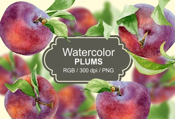 Watercolor Plums