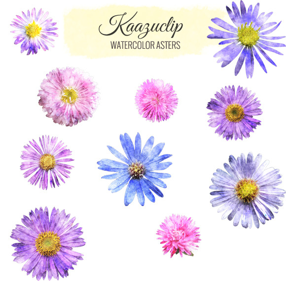 Watercolor Aster Collection