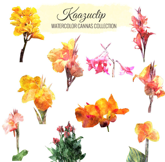 Watercolor Cannas Collection