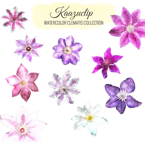 Watercolor Clematis Collection
