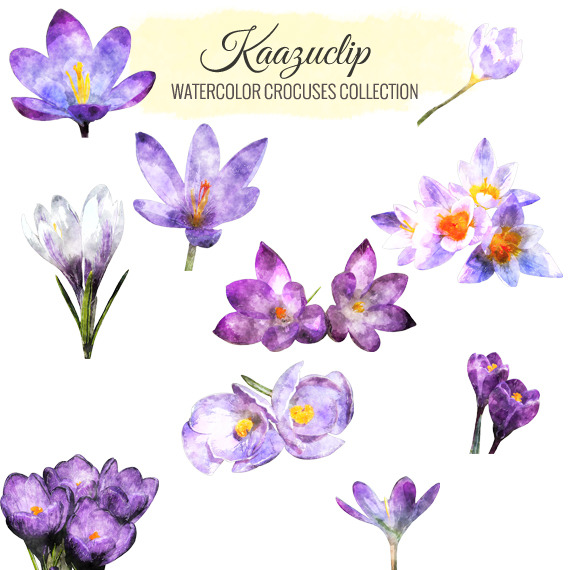 Watercolor Crocuses Collection