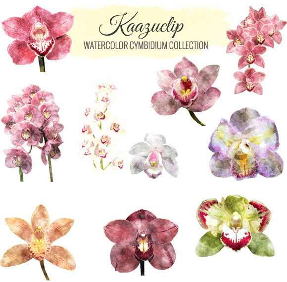 Watercolor Cymbidium Collection