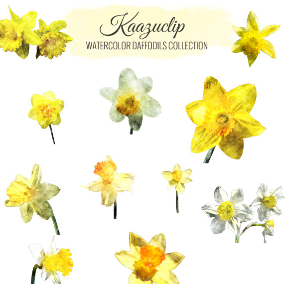 Watercolor Daffodils Collection