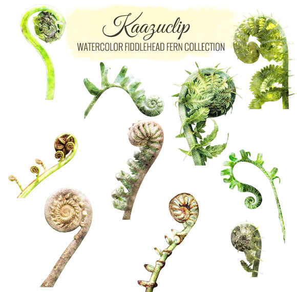 Watercolor Fiddlehead Fern Collectio
