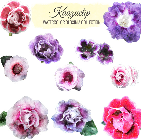 Watercolor Gloxinia Collection