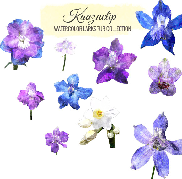Watercolor Larkspur Collection