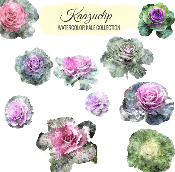 Watercolor Kale Collection