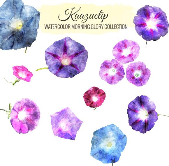 Watercolor Morning Glory Collection