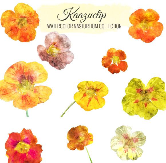 Watercolor Nasturtium Collection