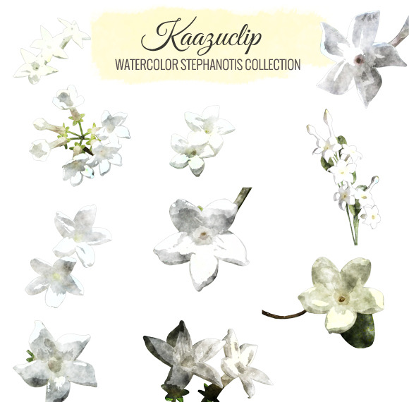 Watercolor Stephanotis Collection
