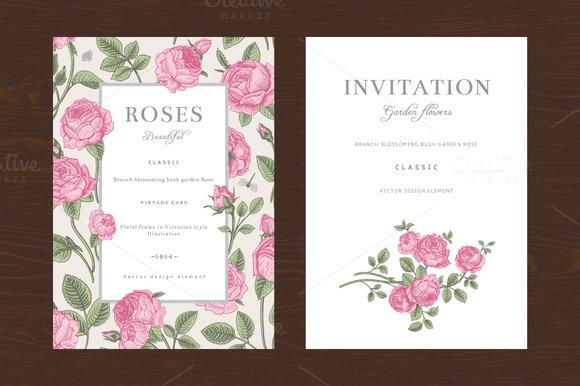 Pink Garden Roses Vector Set