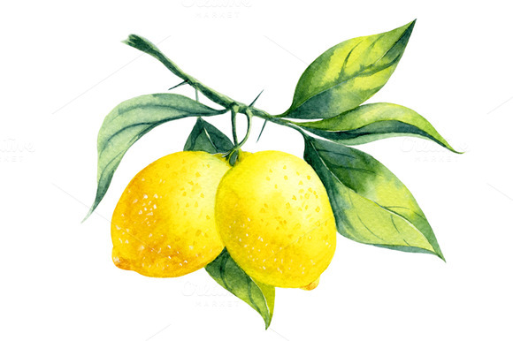Watercolor Lemon Branch