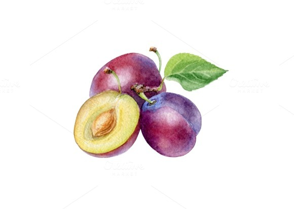 Watercolor Plum
