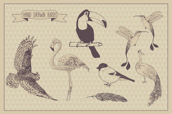 Hand Drawn Birds Set